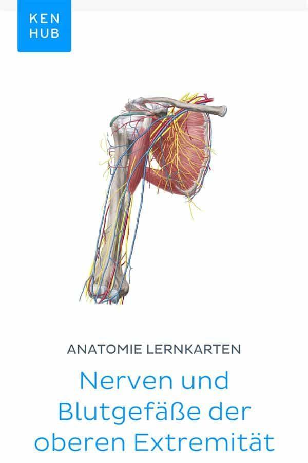 Erfreut Annalen Der Anatomie Anatomischen Anzeiger Ideen - Anatomie ...