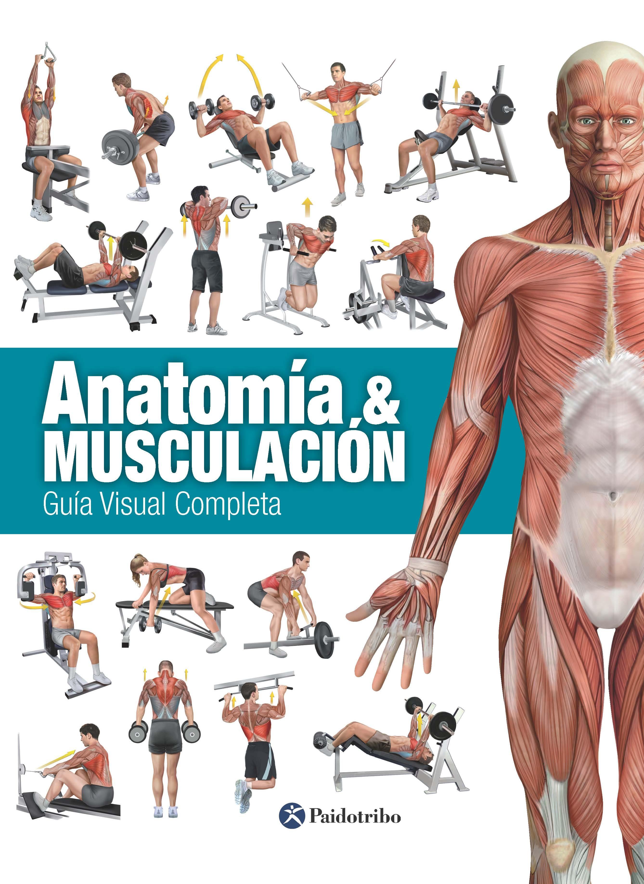 Anatomía & Musculación (color)   por Vv.aa.