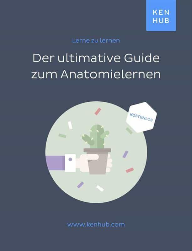 DER ULTIMATIVE GUIDE ZUM ANATOMIE LERNEN EBOOK | | Descargar libro ...