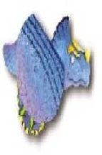 Zippy triceratops por Vv.aa. 978-1862331938 DJVU FB2 EPUB