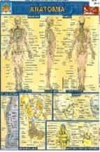 Ficha de anatomia PDF DJVU por Vv.aa. 978-9702401278