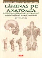 láminas de anatomía: curso de dibujo de la figura humana-giovanni civardi-9788498744798